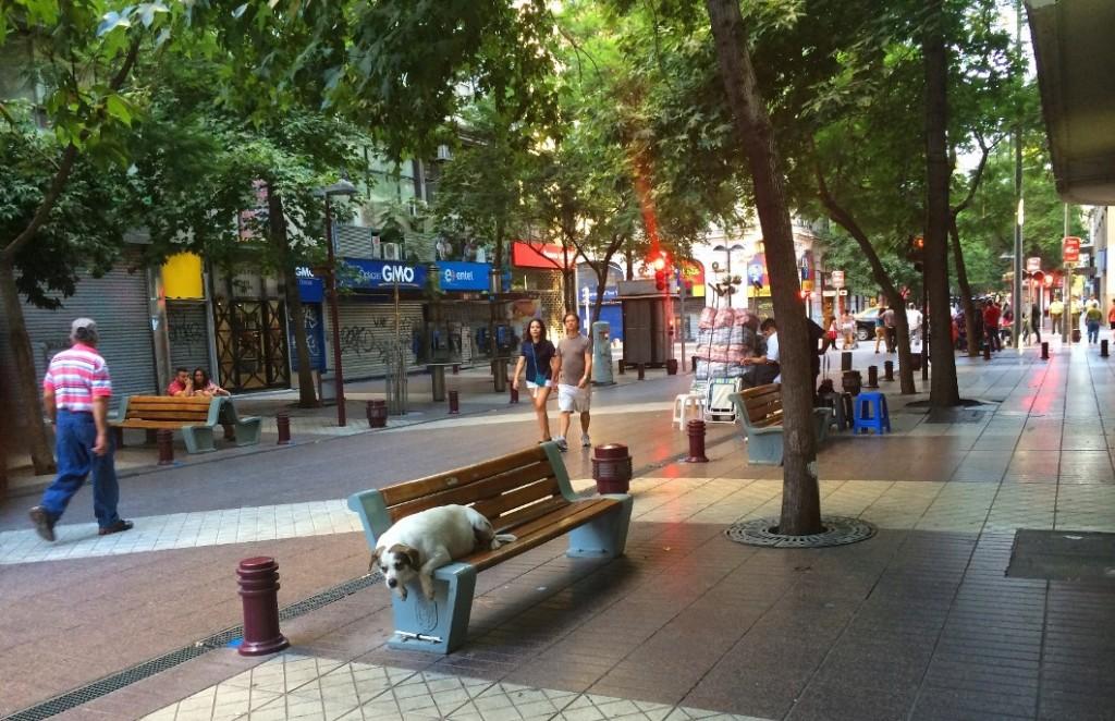 Уличные собаки в Чили чувствуют себя довольно привольно